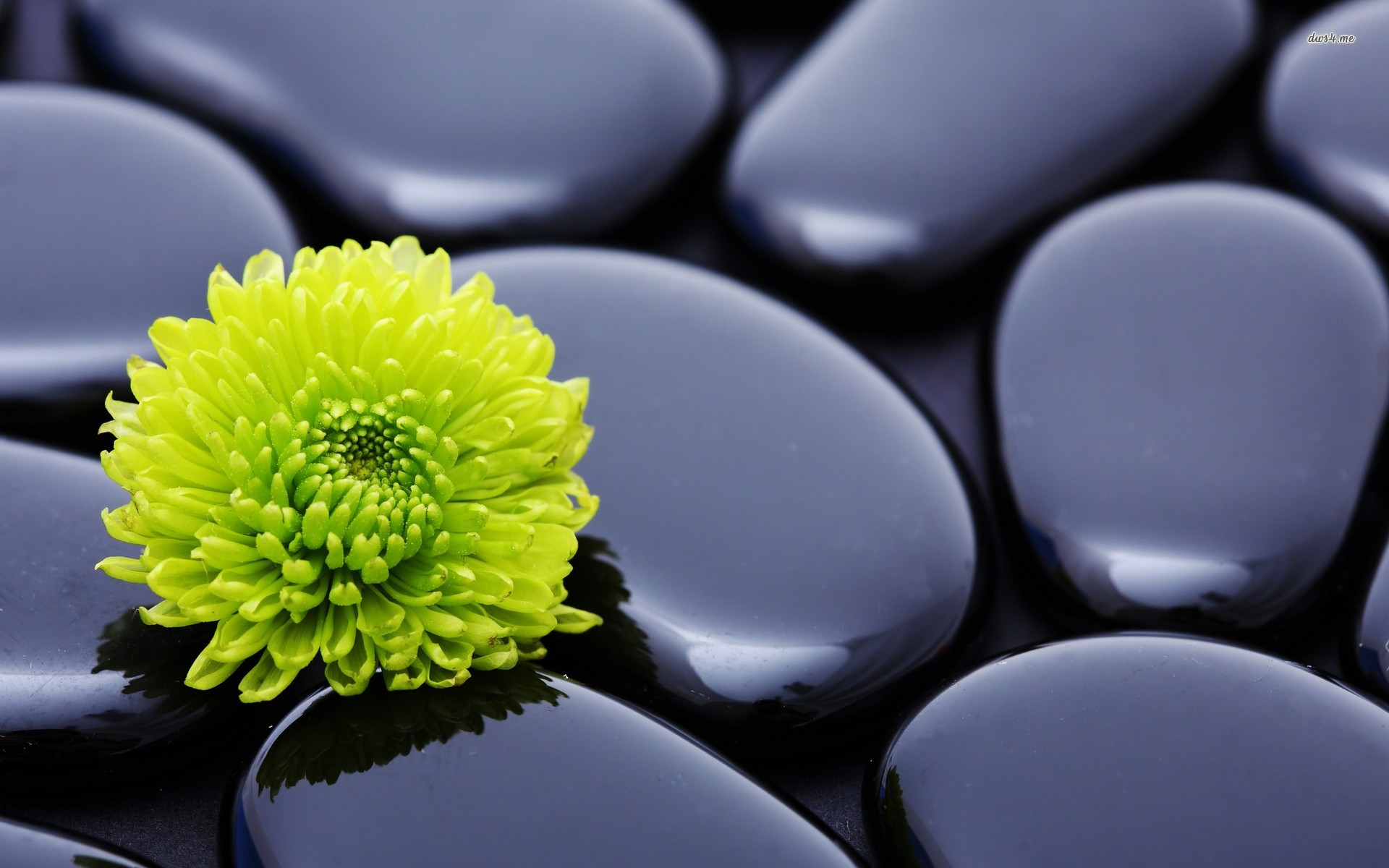 15225-green-dahlia-and-zen-stones-1920x1200-photography-wallpaper
